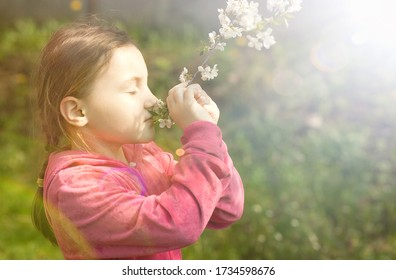 a little girl sniffs a flowering branch of a fruit tree in the spring garden