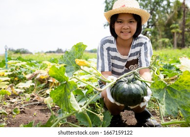 Little girl spends her free time helping her family grow vegetables and caring for their produce in the garden.  She care the pumpkin to grow and sell the market.  Agricultural concepts.
