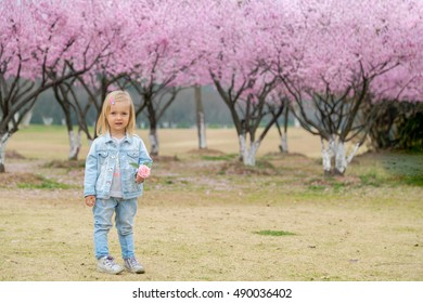 little girl stands in the garden of cherry blossoms and holding a flower