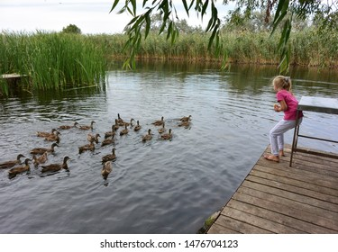 A little girl stands on a wooden boat pier and feeds a flock of floating wild ducks with bread. The Delta of the Volga river, Russia