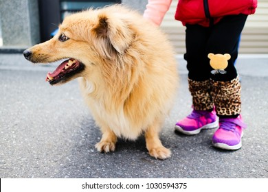 Little girl stroking yellow dog's hair by hand in the summer street.Close up. Symbol of friendship, childhood, family relations, happiness.