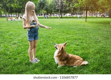little girl training a corgi dog at the park