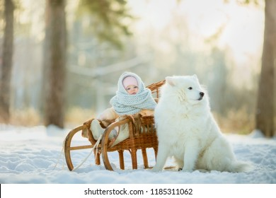 Little girl in vintage sled with Samoyed dog at winter park