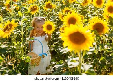 little girl walks around the field of sunflowers