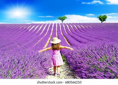 A little girl walks between the lavender fields in Provence