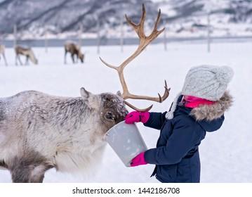 Little girl in a warm winter jacket feeding reindeer in winter, Tromso region, Northern Norway