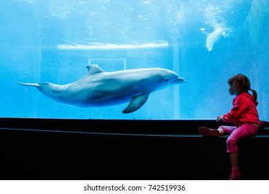 Little girl watching dolphin in aquarium closeup