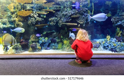 little girl watching fishes in a large aquarium