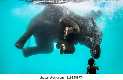little girl watching playful asian elephant bathing and diving under the water in Thailand