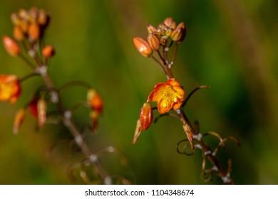Little golden flowers