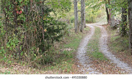 Little, Gravel Country Road Covered In Fall Leaves And Surrounded By Tall Trees And Hanging Vines On A Farm In The Mountains Of South West Virginia