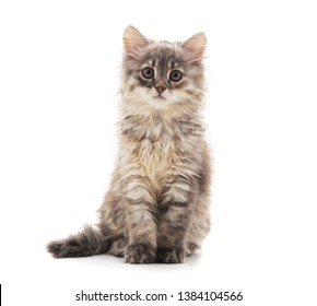 Little gray cat isolated on a white background.