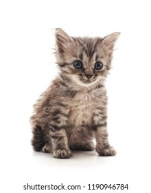 Little gray kitten isolated on a white background.
