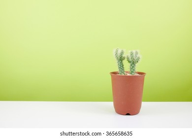 The little green cactus in small brown plant pot on white table for home decoration.