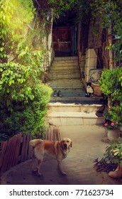 Little green courtyard is picturesque part of nature in narrow entrance to old house. It is surrounded by green lush foliage. Big red dog stands in the foreground looking to the camera