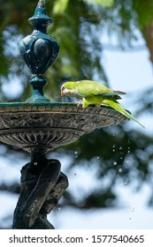 Little green parrot sits fountain and drinks water, nature life background