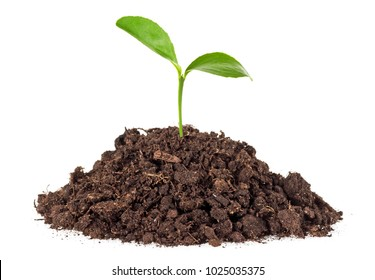 Little green plant grow from soil, white background