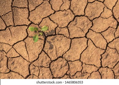 Little green plant growing up in dried desolate land or dry areas. Top view with copy space. Hopes and encouragement concept.