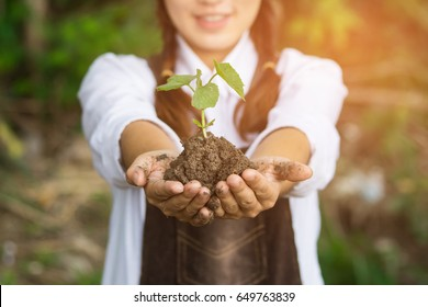 Little green plant in the hands of woman