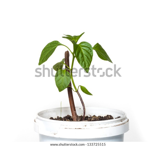 little green plant isolated on white