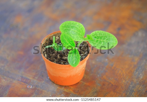 little green seedling in the pot, plant cultivation