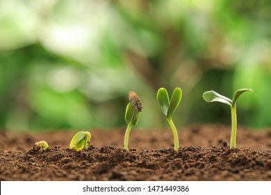Little green seedlings growing in soil against blurred background