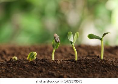 Little green seedlings growing in soil against blurred background