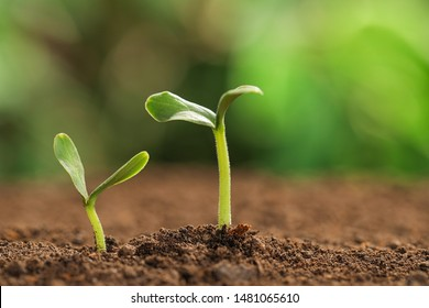 Little green seedlings growing in soil against blurred background. Space for text