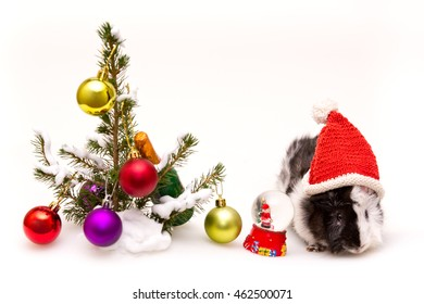 little Guinea pig celebrates Christmas and new year