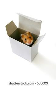 Little hamster sitting inside a box