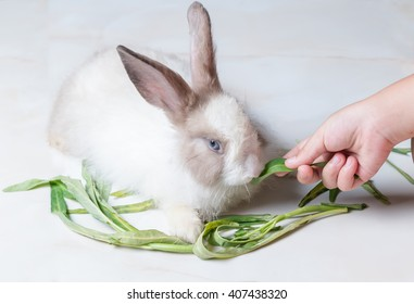little hand girl feed morning glory to rabbit