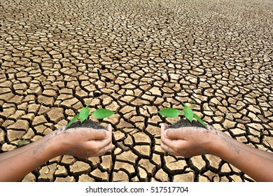 the little hand holding green plant  on dry ground .concept save the world and drought