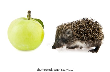 little hedgehog and apple on a white background
