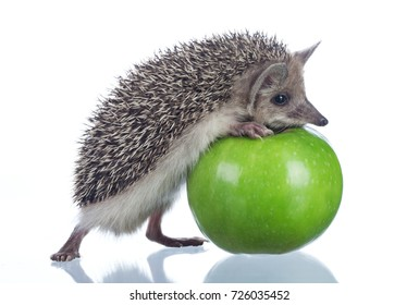 little hedgehog and green apple isolate on white.