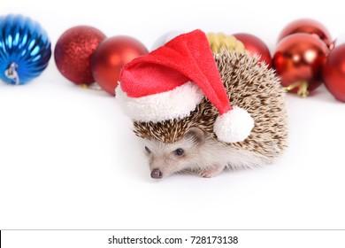 Hedgehog Wearing Santa Hat Christmas Ornament Tree Decoration