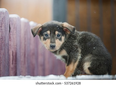 little homeless puppy with sad eyes