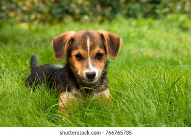 little homemade puppy on the green lawn grass in the yard