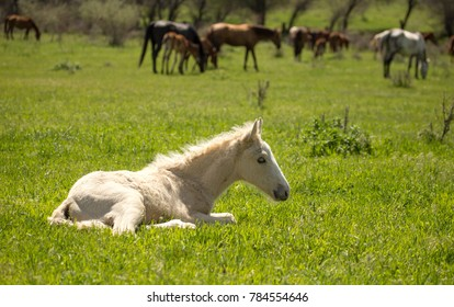 little horse lies on the green grass