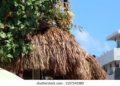 Little house in palm