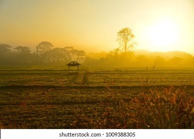 little hut in the paddy field