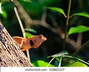 Little Iguana on a rainforest tree closeup photo