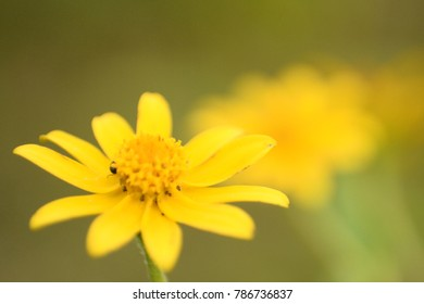 Little insect on yellow flower