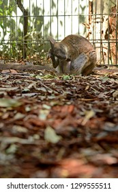 Little kangaroo sitting in the cage.Concept about life consideration. Unhappy and loneliness Feeling.Vertical photo with copy space for design work