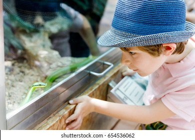 Little kid boy admire Poisonous green snake in terrarium through the glass in zoo. Happy school child watching and observing animals and reptiles. Family leisure with kids