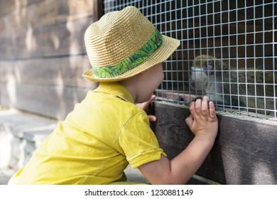 Little kid boy watching animal cage zoo. Happy child having fun with animals safari park on warm summer day.