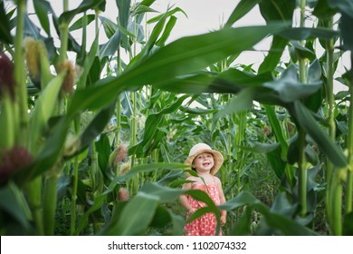 little kid in a hat laughing in the middle of a corn field. harvest time. organic agriculture for children