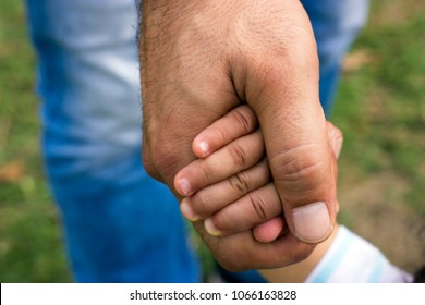 Little kid is holding grandfathers hand in the field