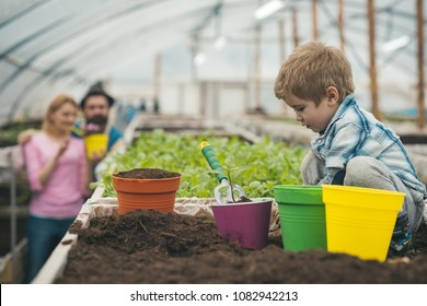 Little kid planting flower in pink pot. Side view blond boy playing in box with soil while parent work in greenhouse.