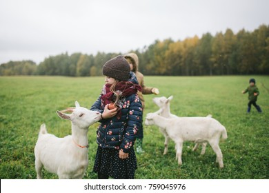 Little kids playing and feeding with goats on the goats cheese farm outdoors