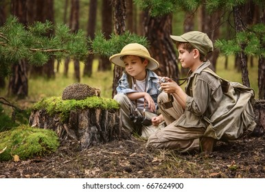 Little kids tourists met a hedgehog on a stump in the forest